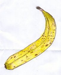 Bananas Are A Rich Source Of Potassium